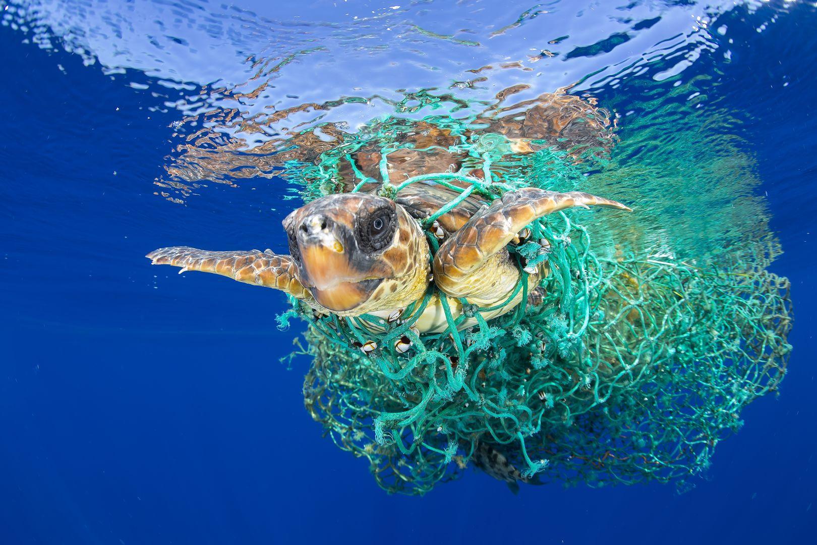 maillots de bain recyclés Les Sirènes